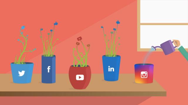 grow social media presence